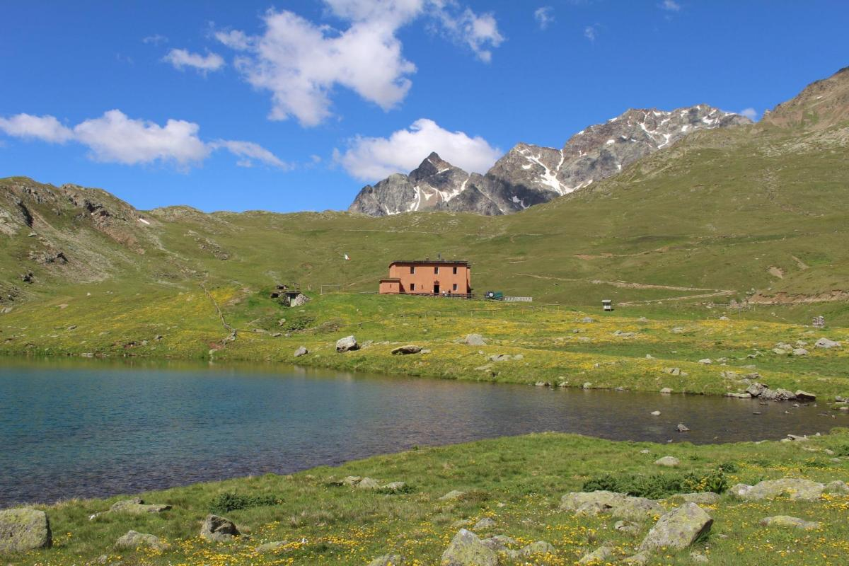 Viola alpine hut